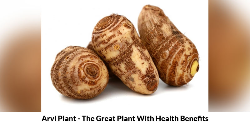 Arvi Plant Health Benefits