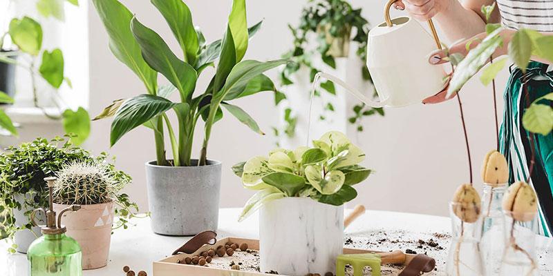 Indoor Houseplants Care Tips
