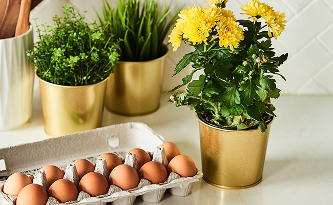 Give Boiling Eggs and vegetables Water
