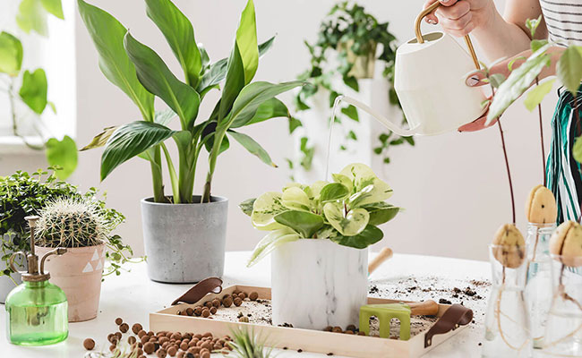 Other Gardening Secrets