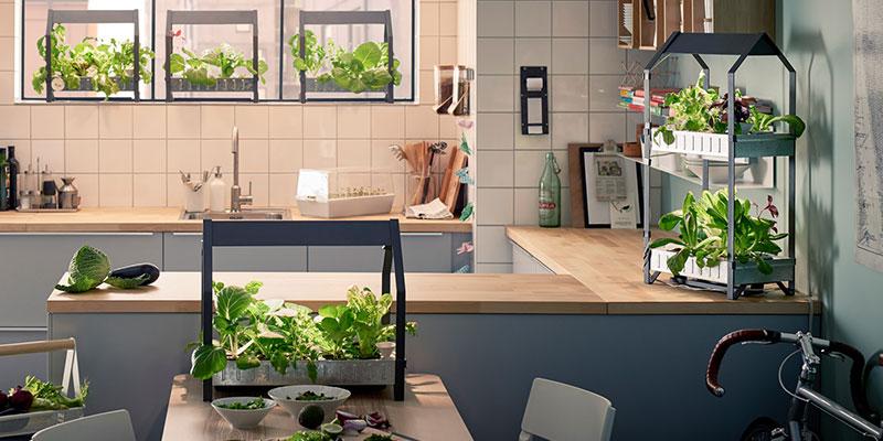 Plants to Grow in Kitchen Garden