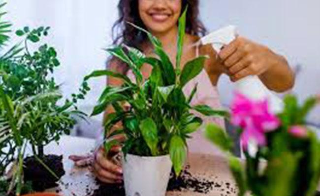 Prevent Pest Attacks on Plants