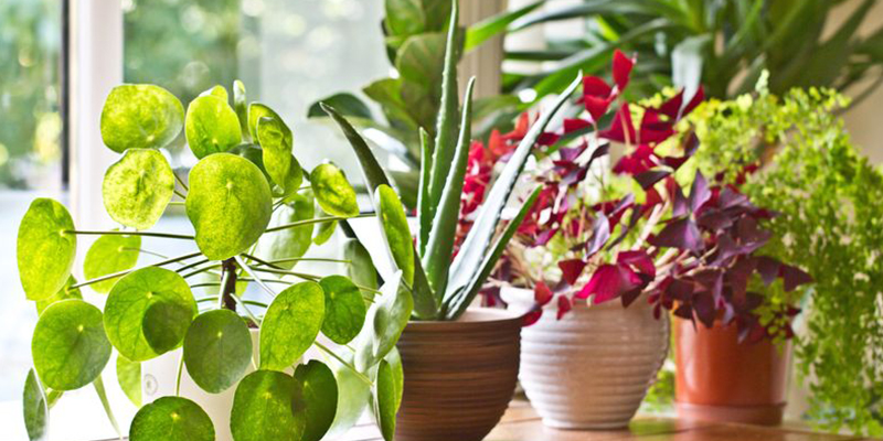 Secrets About Indoor Green Plants
