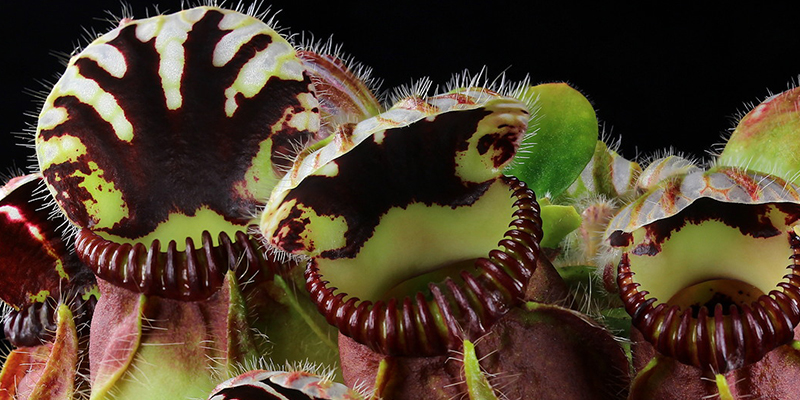 All About Carnivorous Plants