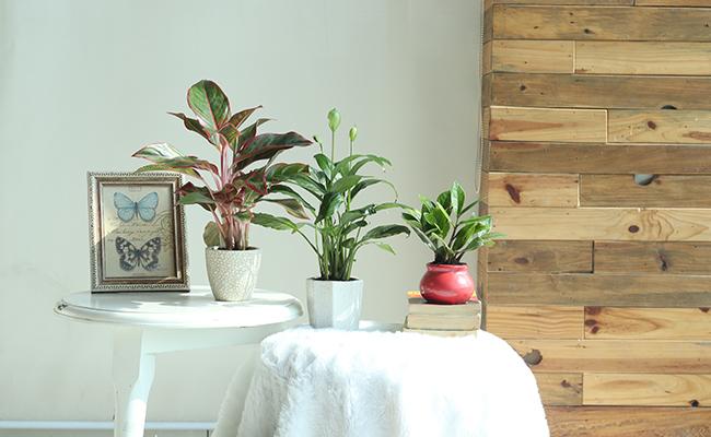 Adopting Plant