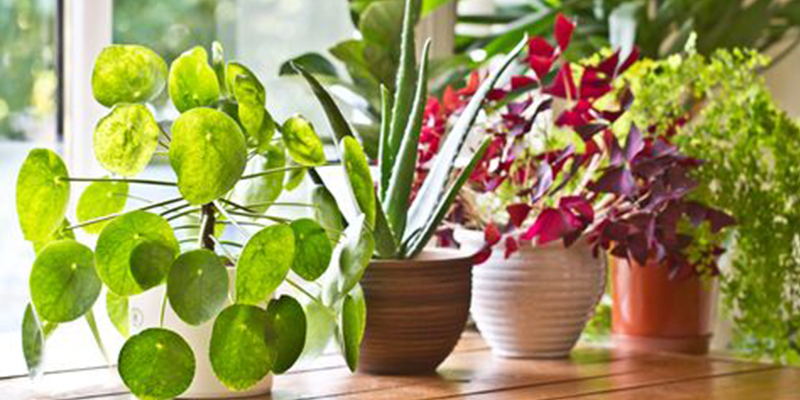 Best Suitable Plants for Bathroom