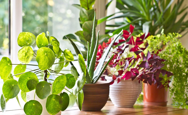 Choose The Right Pots for Your Plants
