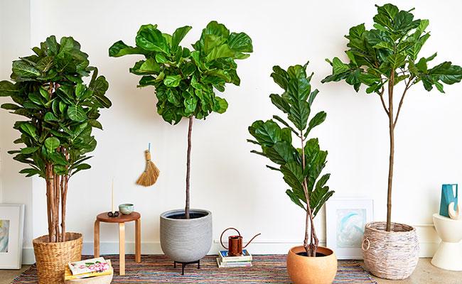 Create A Plant Corner