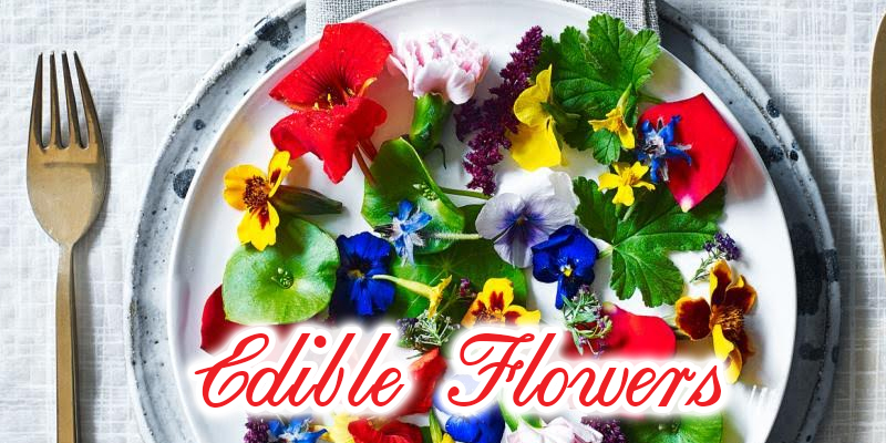 Did You Know There Are Edible Flowers