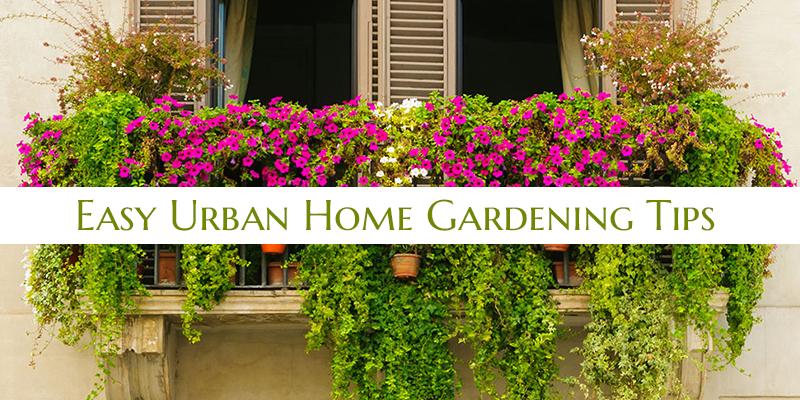 Easy Urban Home Gardening Tips