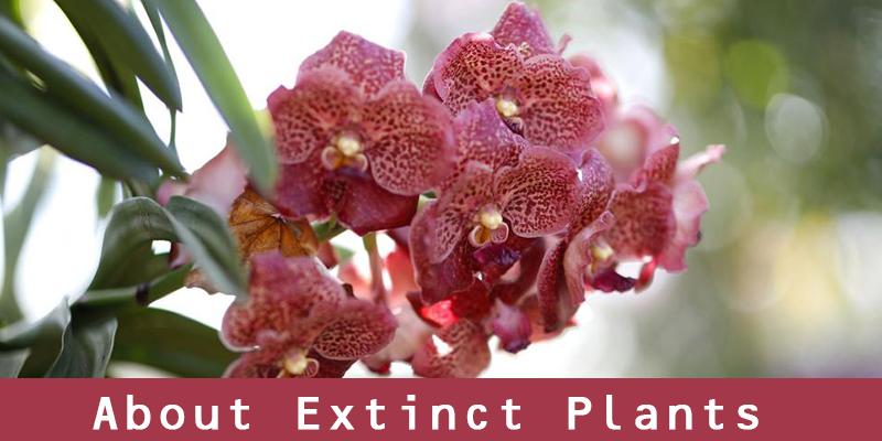 Extinct Plants