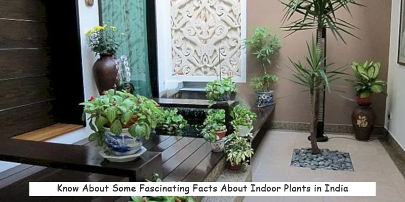 Facts About Indoor Gardening
