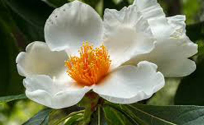 Did you Know About These Extinct Plant Species in India?