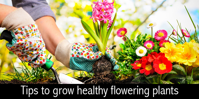 Grow Plants at Home