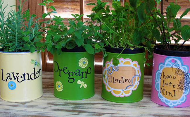 Grow Plants in Containers