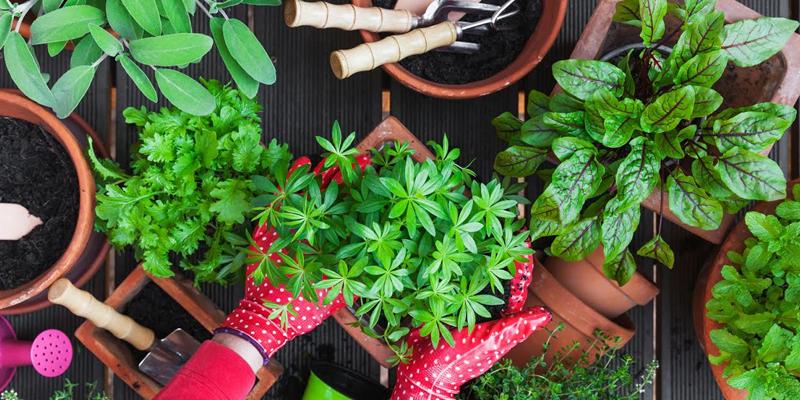 Growing Seasons of These Vegetables