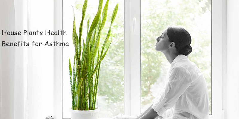 House Plants Health Benefits for Asthma