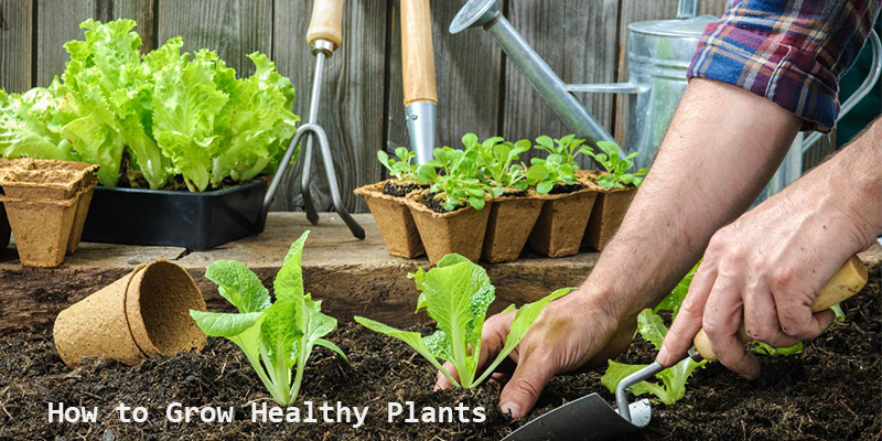 How to Grow Healthy Plants