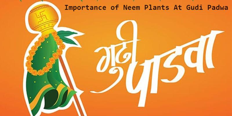 Importance of Neem Plants At Gudi Padwa