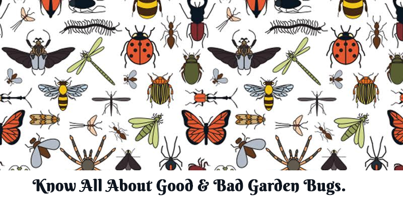 Know All About Good and Bad Garden Bugs