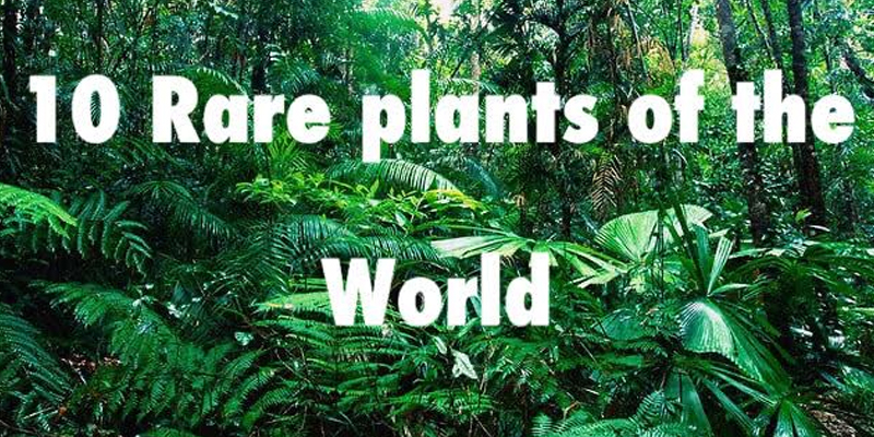 List of Rare Plants in the World