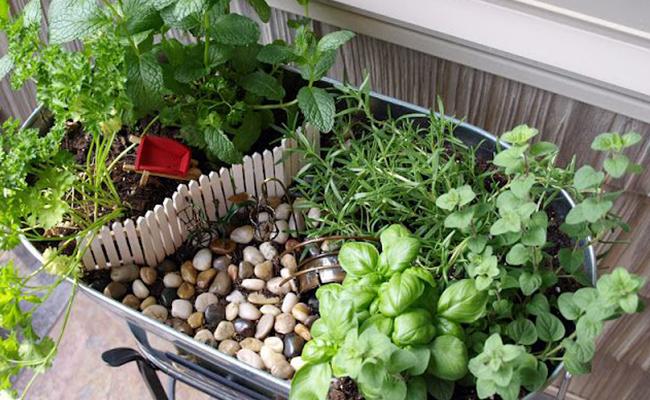 Make a Herb Garden
