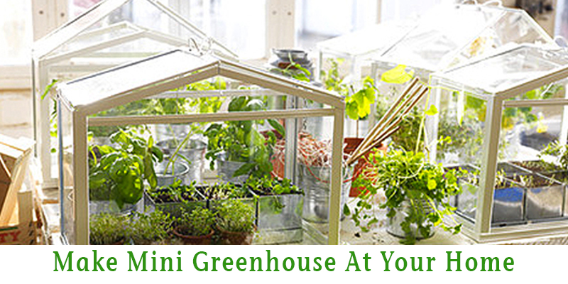 Make Mini Greenhouse At Home