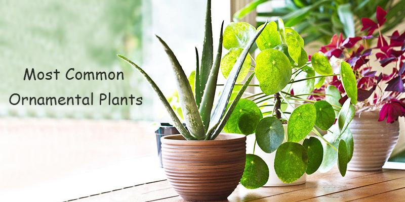 Most Common Ornamental Plants