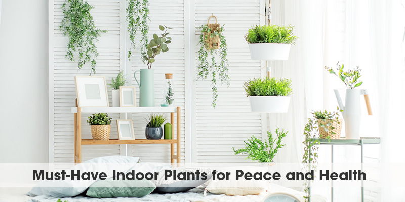 Must-Have Indoor Plants for Peace and Health