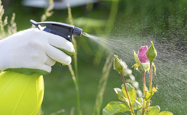 Nourish your Garden