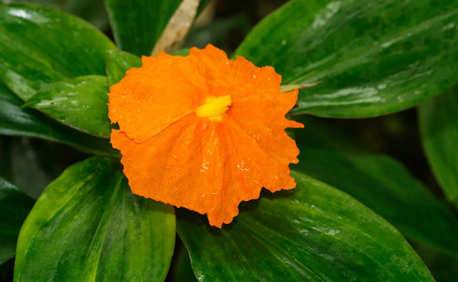 Orange Flower in Plant