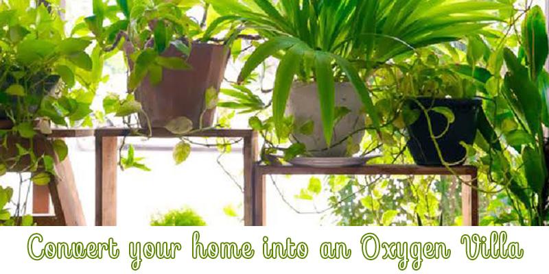 Plants Convert Home into an Oxygen Villa