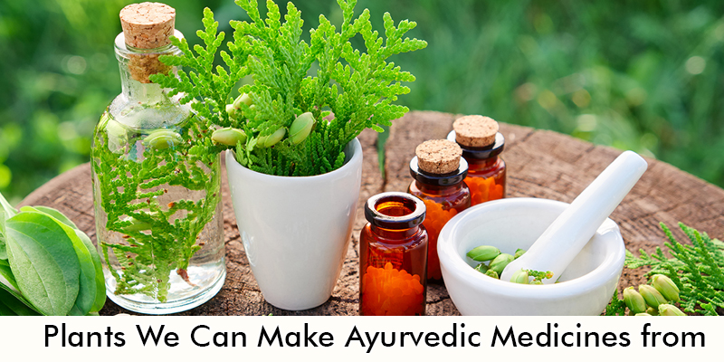 Plants We Can Make Ayurvedic Medicines from
