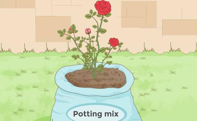 Prepare Environment for Plant