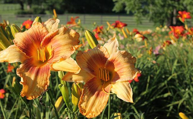 Right Plants for Urban Gardening