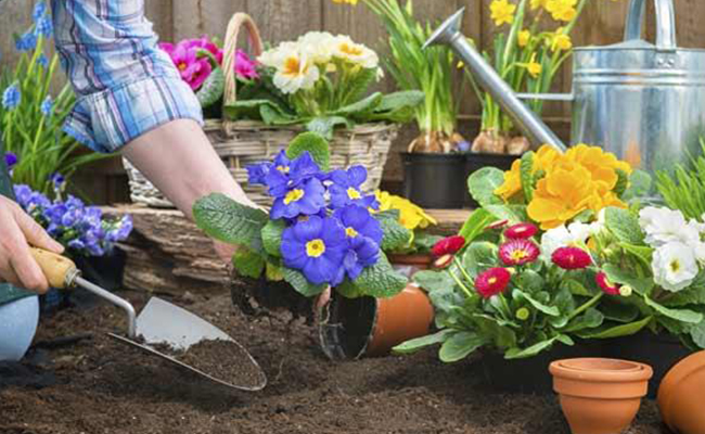 Spring Ready Plants Need