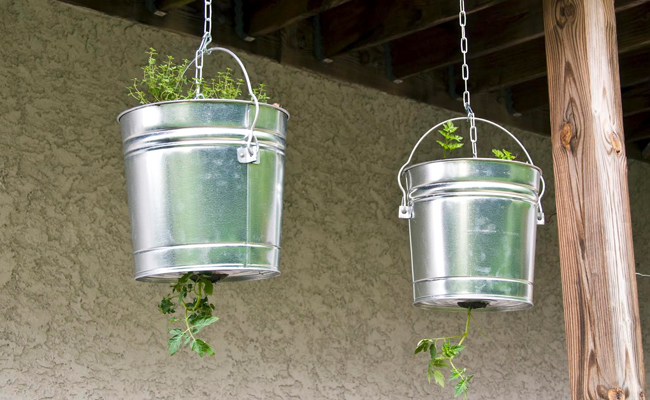 Step 5- Grow Hanging Tomatoes Upside Down