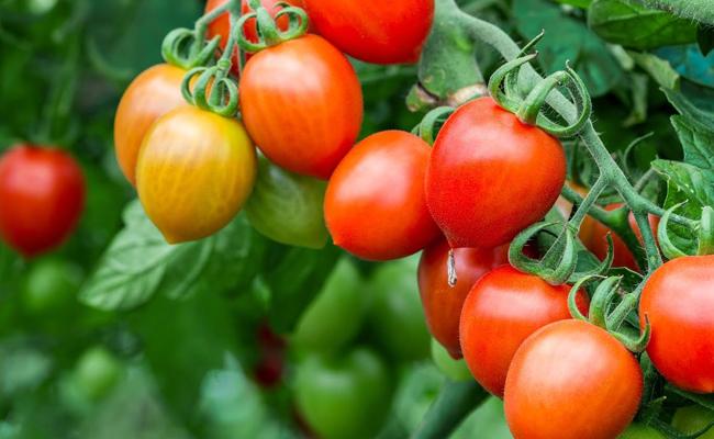 Vegetables in Summer Season