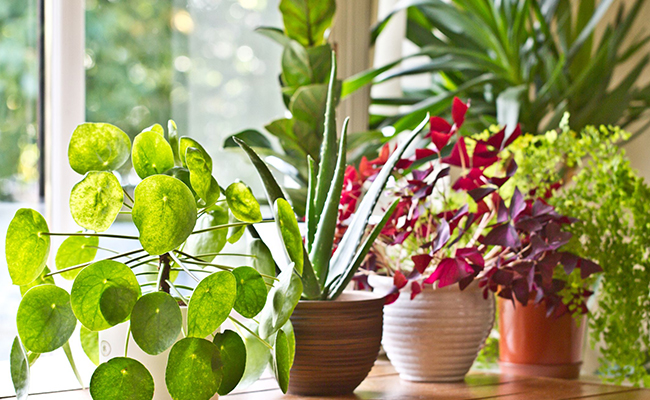 Sunlight and Cleaning Need in Plants