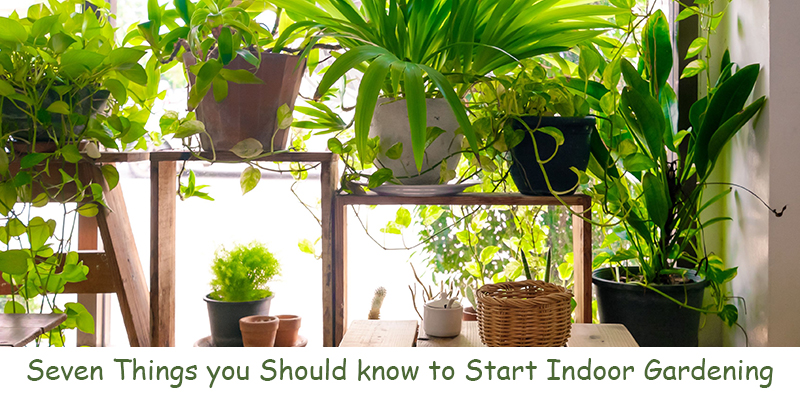 Things Must Know to Start Indoor Gardening