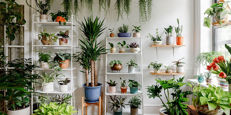 Indoor Plant Types And Care Tips