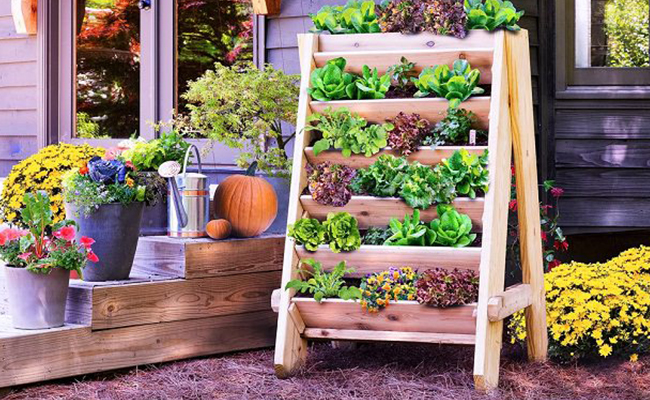 Urban Gardening Vertical