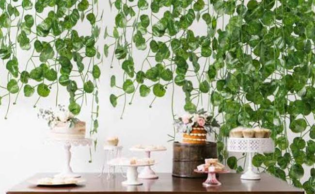 Wedding Vine Plant