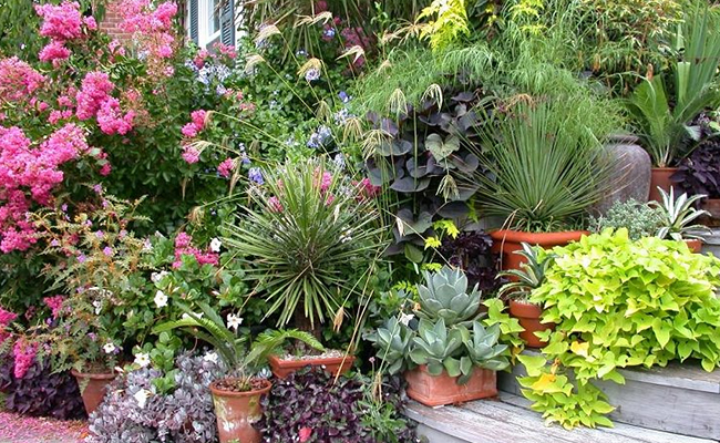 What To Plant