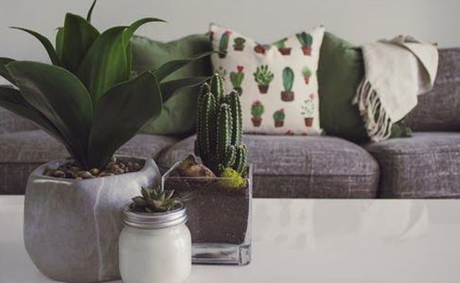 Why Indoor Plants are Effective Air Purifiers