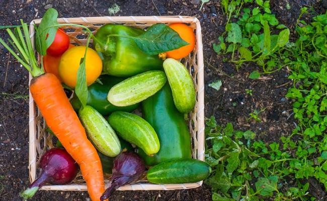 Vegetables in Winter Season