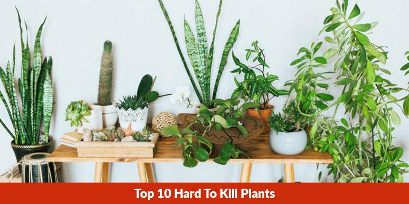 10 Best Hard To Kill Plants