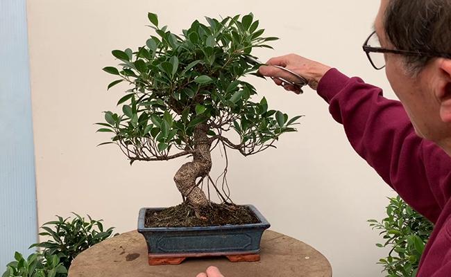 How to Take Care of Bonsai Tree
