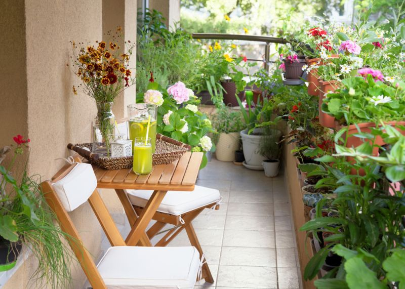 Low Maintenance Plants For A Picturesque Balcony