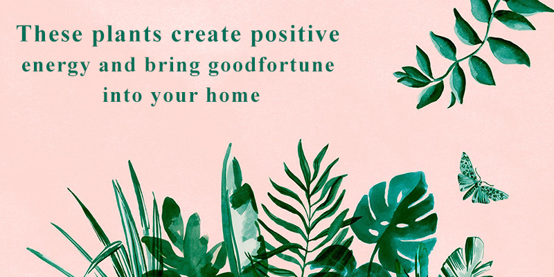 7 Best Plants for Wealth and Fortune
